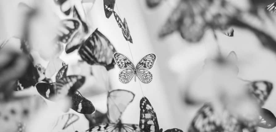 Black And White Butterflies Decor 9159
